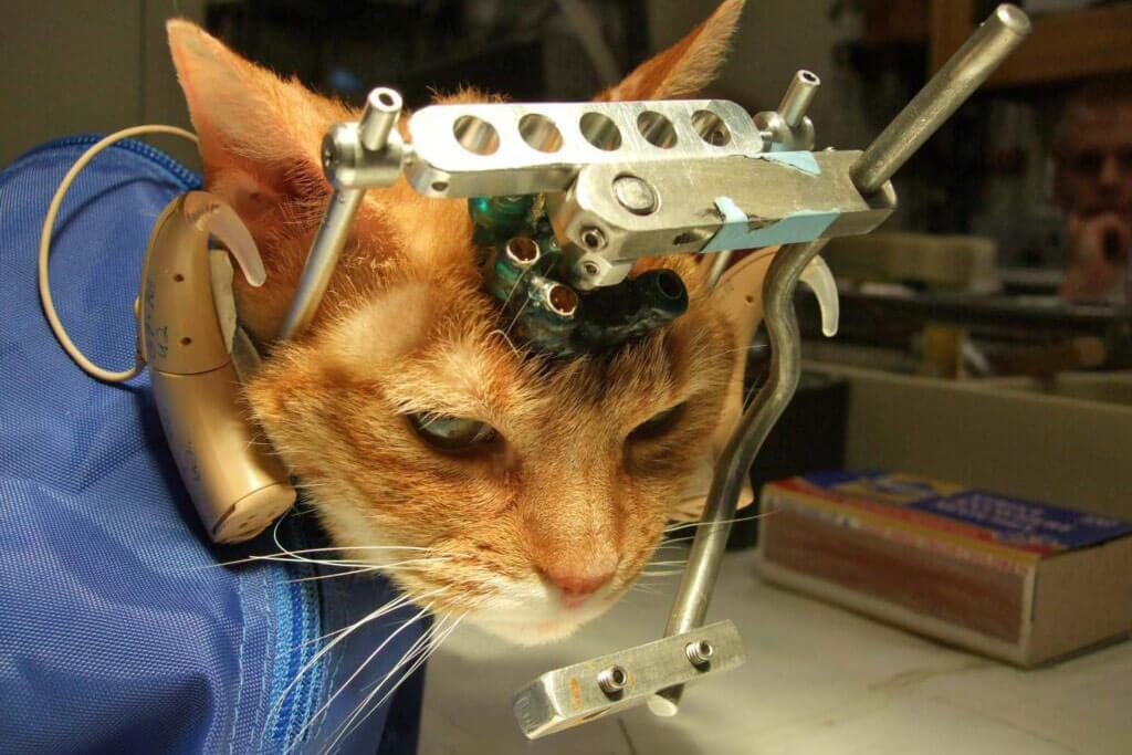 Tierversuche an Katze