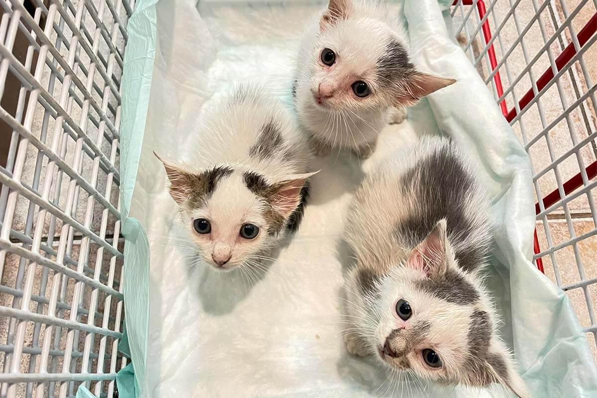 Diese 3 Katzenbabys konnten in letzter Sekunde gerettet werden