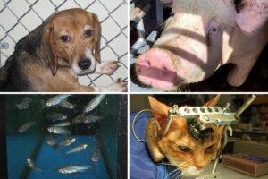 Tierversuche an verschiedenen Tierarten