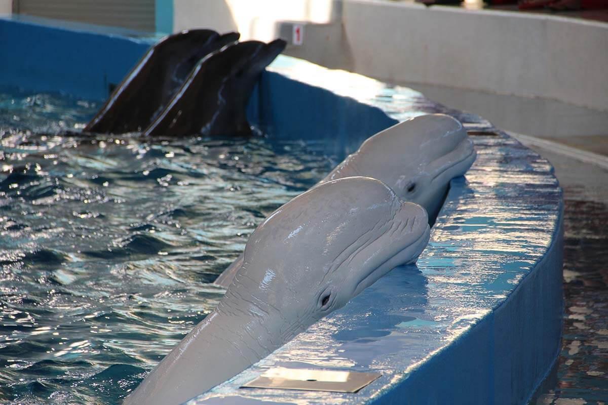 Tiergarten Nürnberg: 50 Jahre Tierquälerei im Delfinarium