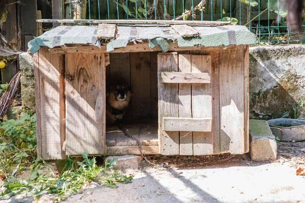huendin in einer hundehuette