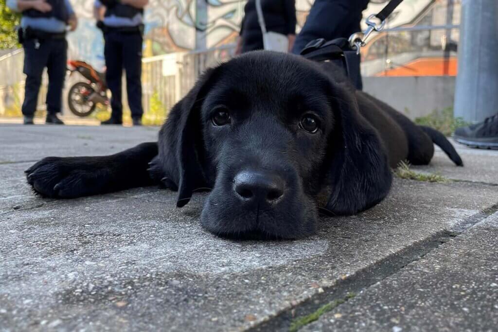 Hundewelpe liegt am Boden vor Polizistinnen