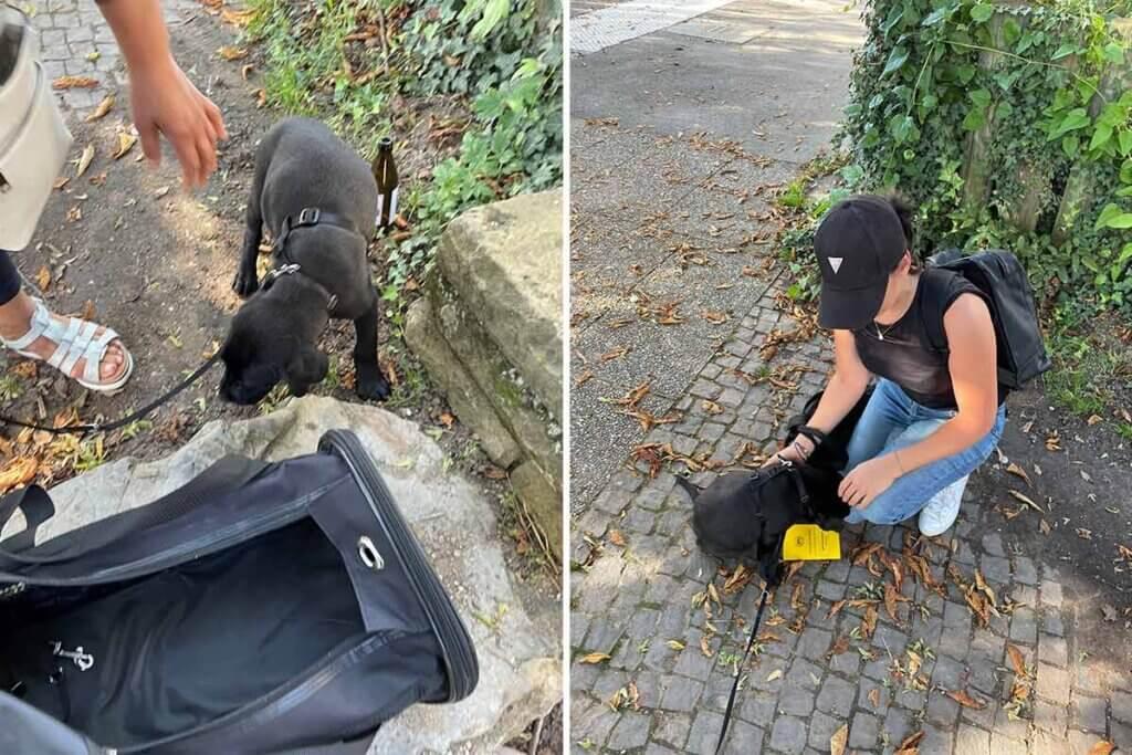 Frau neben Hundewelpen und Sporttasche