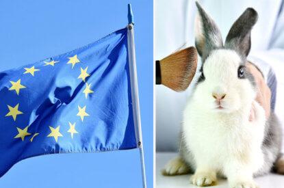 Collage Kaninchen und EU Flagge