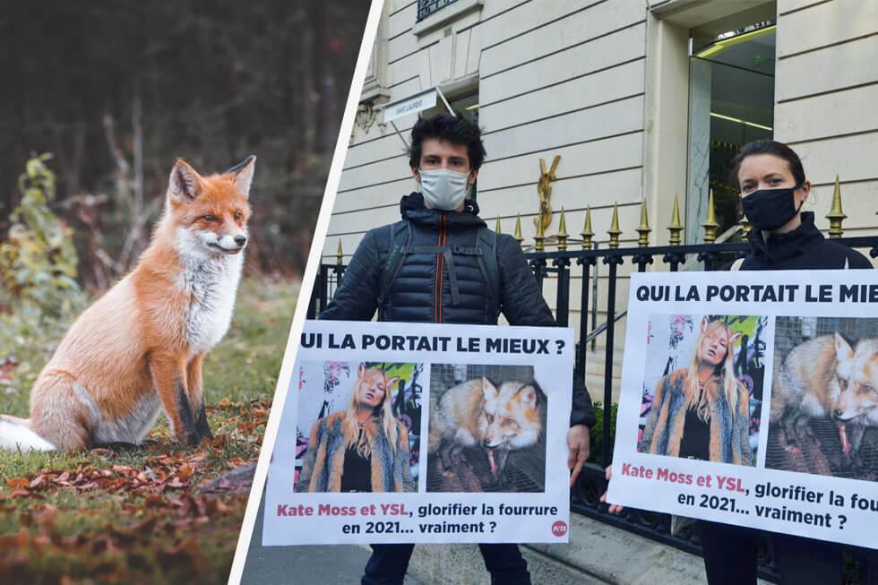 Erfolg! Saint Laurent und Brioni werden nach PETA-Kampagne pelzfrei
