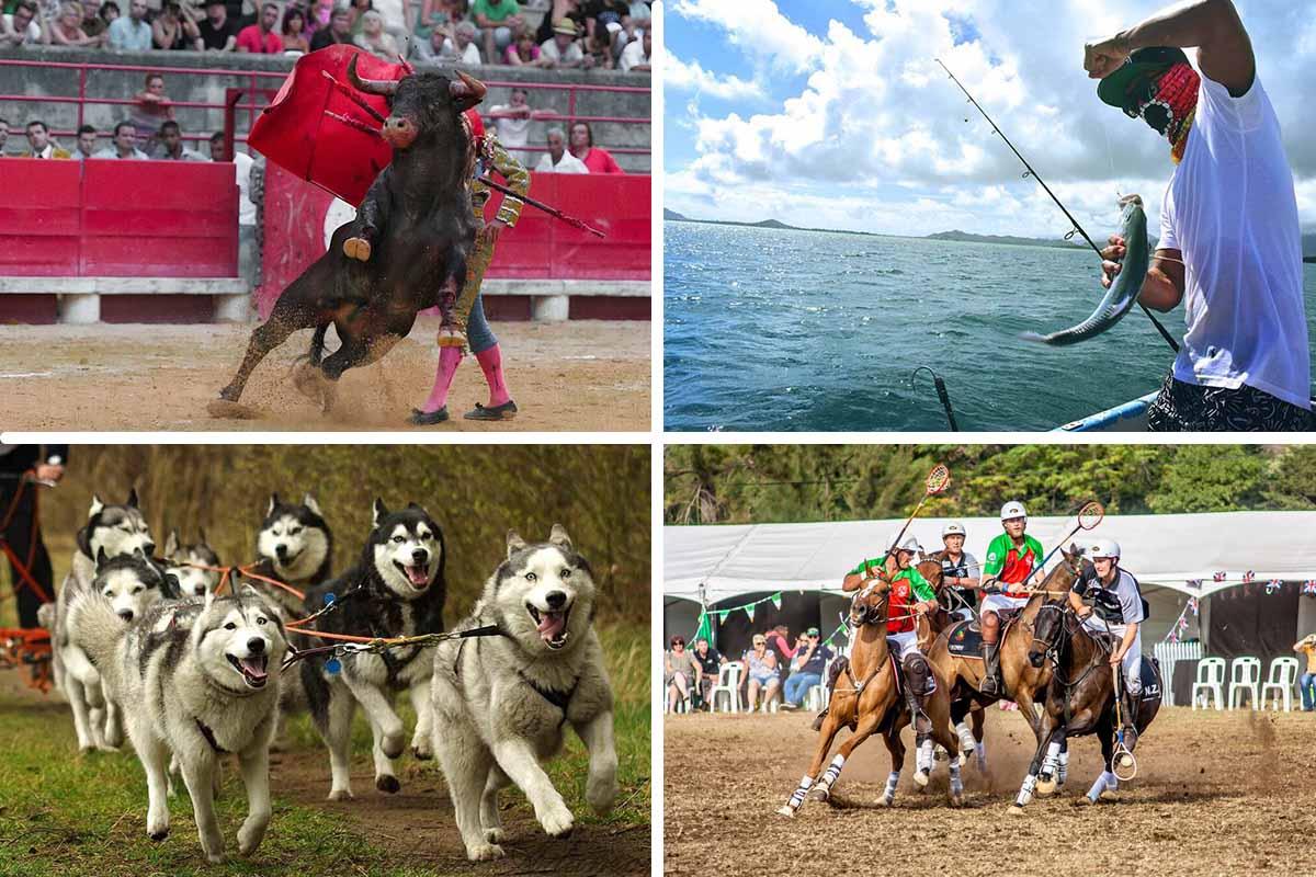 Angeln, Reiten, Rodeo & Co: 7 Sportarten, die Tierquälerei sind