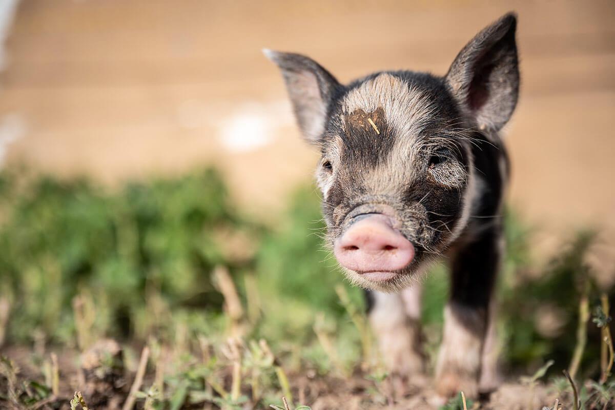 """VOX-Experiment """"GewissensBisse"""": Tiere töten oder nicht?"""