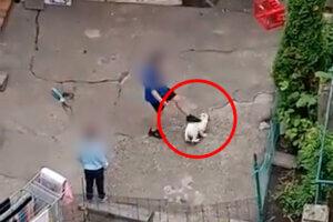 Kind tritt nach Hund