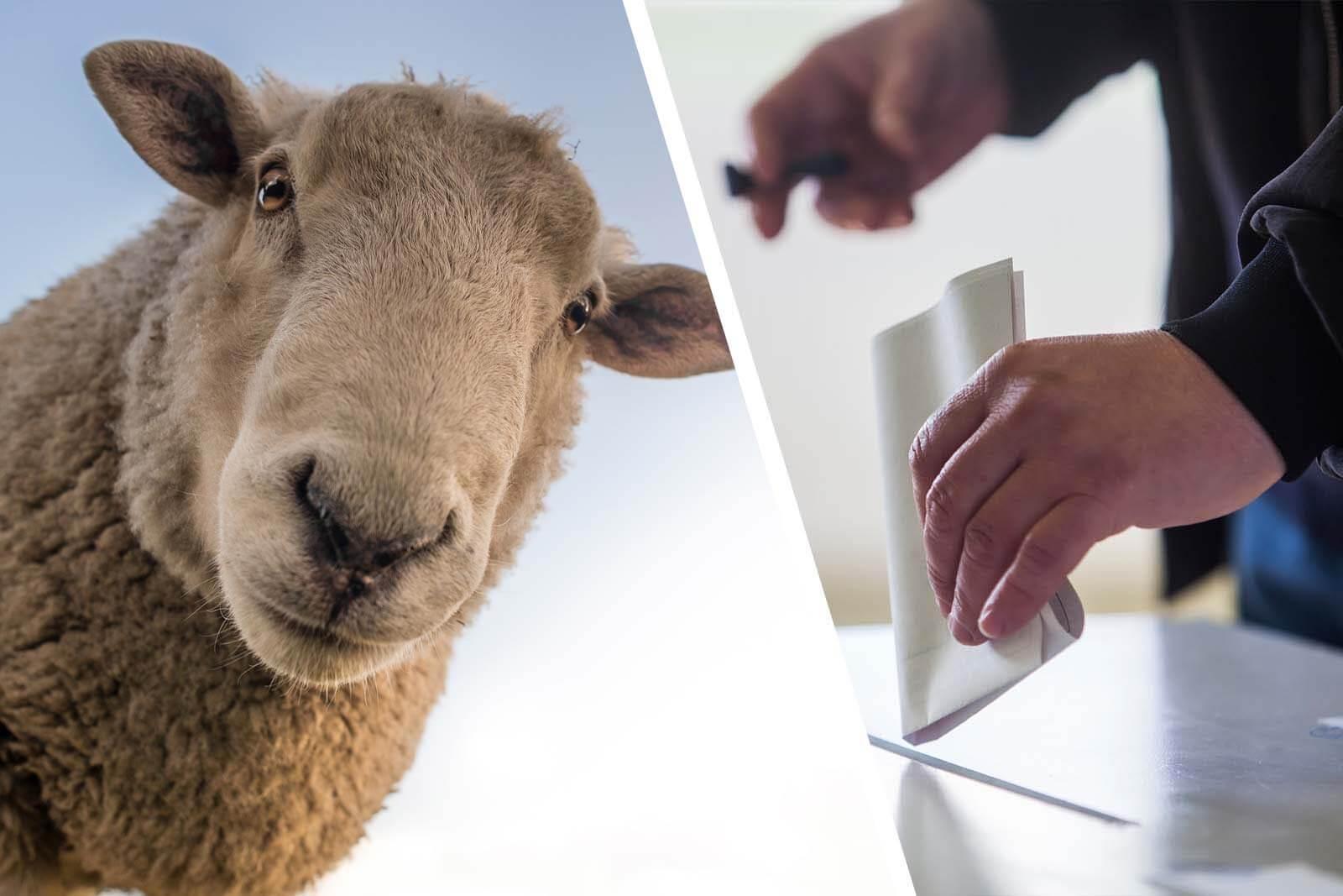 Wahlen Berliner Abgeordnetenhaus: Tierschutz-Wahlprüfsteine 2021