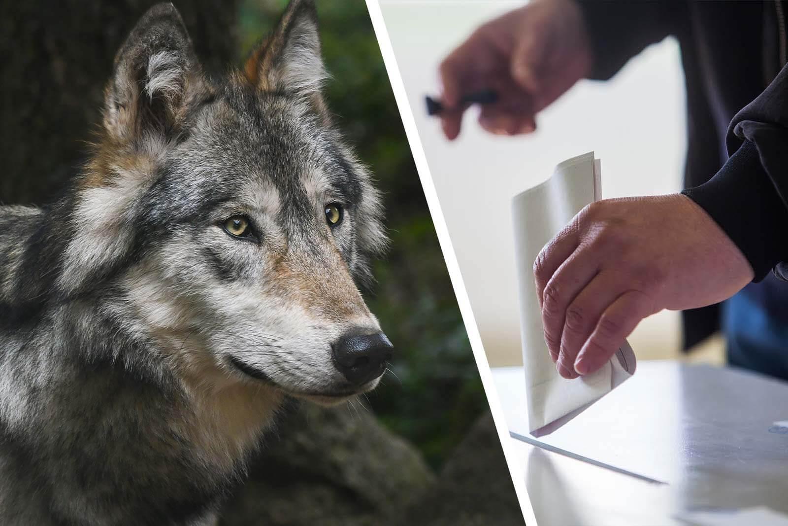 Landtagswahlen Mecklenburg-Vorpommern 2021: Tierschutz-Wahlprüfsteine