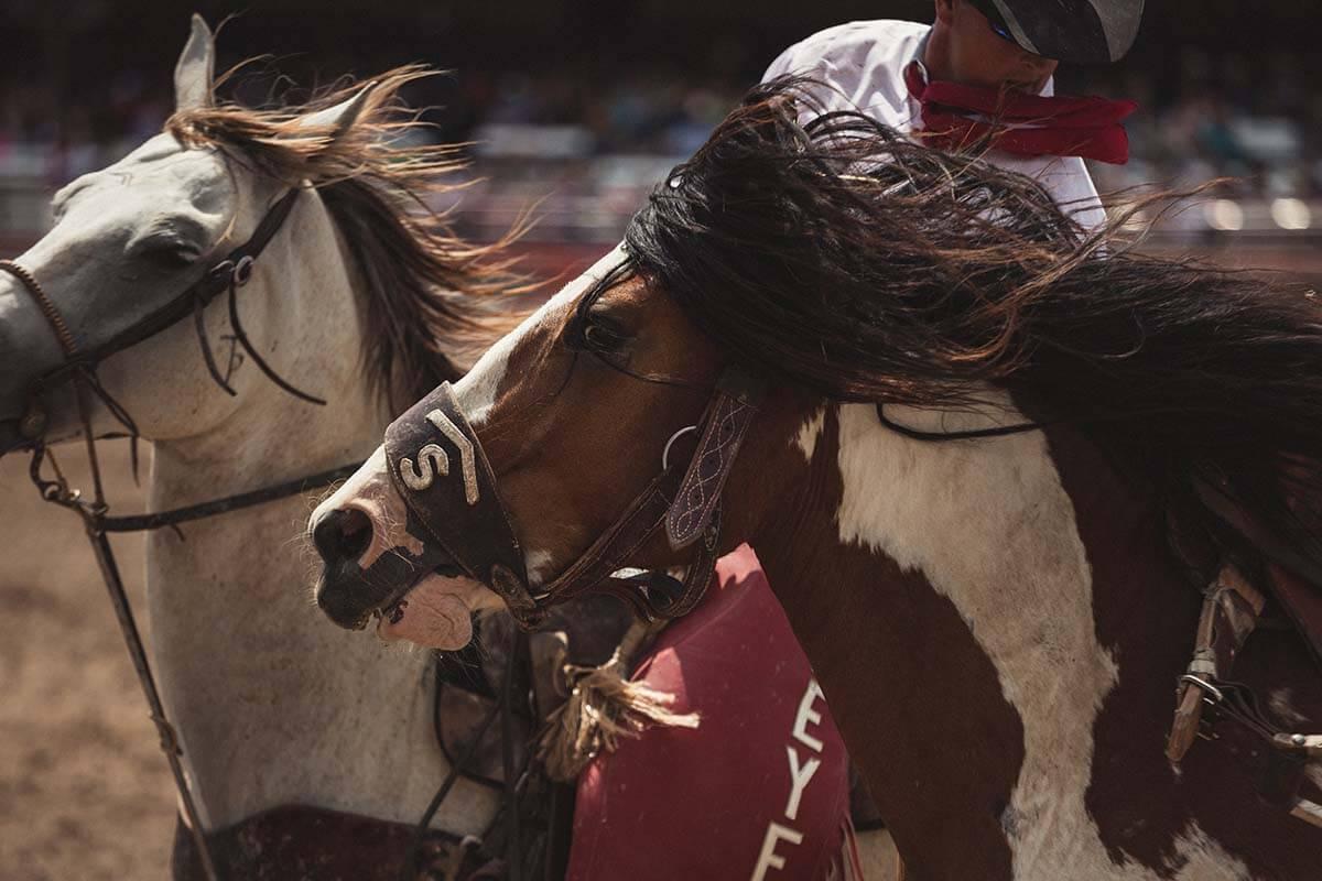 """Pferdejagd: Nicht nur in Spanien eine grausame """"Tradition"""""""