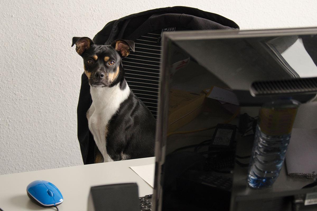 Marketing Manager (m/w/d) für den Bereich: Beauty Without Bunnies Programm (Corporate Responsibility)