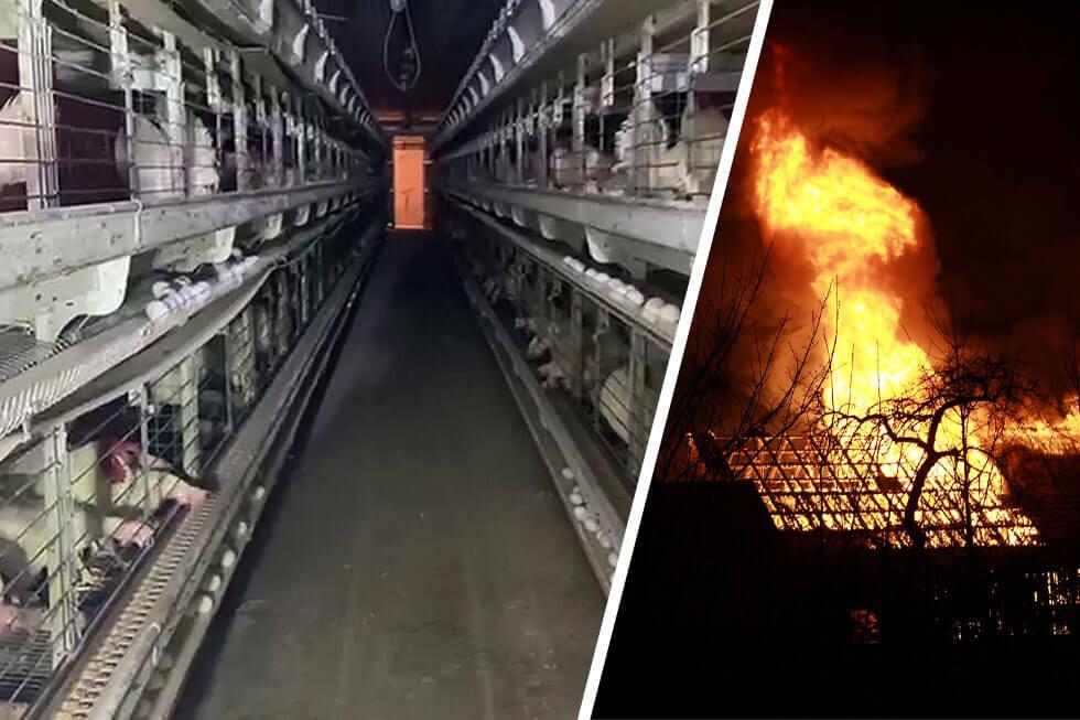 Anzeige: 20.000 Hühner bei Stallbrand in Gehrde gestorben
