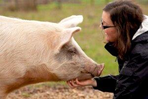 Frau streichelt Schwein