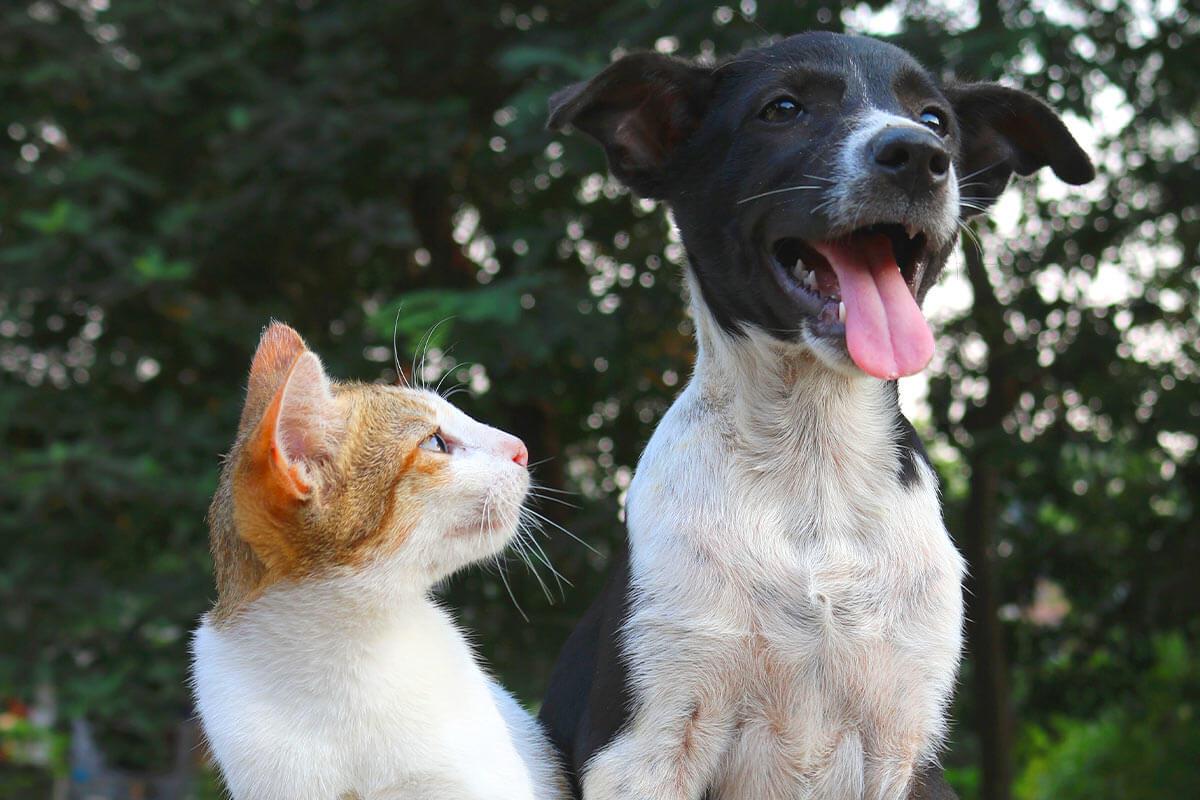 Hund, Katze, Hamster & Co.: Warum Tiere keine Ware sind
