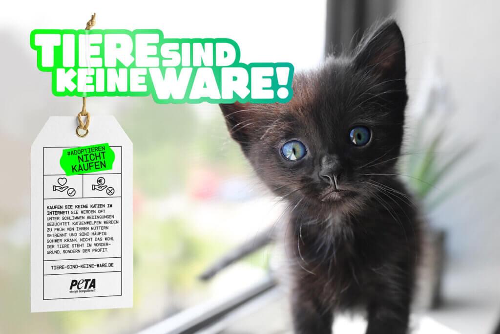Tiere sind keine Ware Motiv Katze