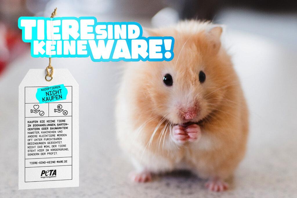 Tiere sind keine Ware Motiv Hamster