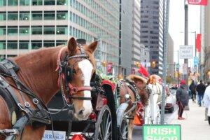 pferd in der stadt