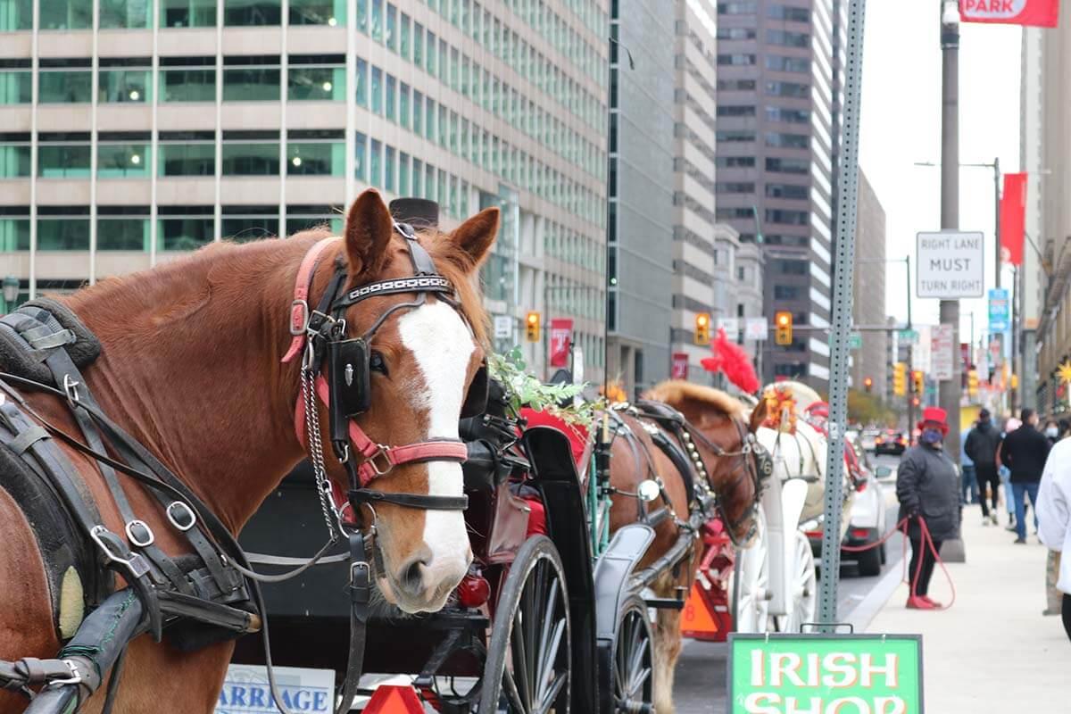 Video: Kutschunfall in New York City – Pferd schwer verletzt